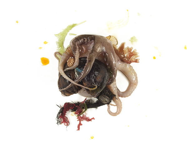 Octopus, unidentified nut, cicada wing, distressed cloth, algae, isopod, friendship bracelet, paint, 2013