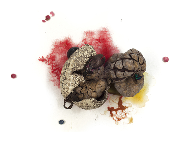Invasive ground beetle, decayed golf ball, nylon thre ad, unidentified berries, halictid bee, paint, 2013